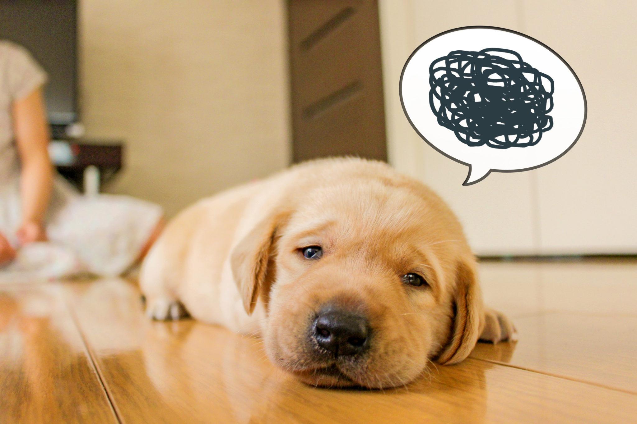 うずくまる犬