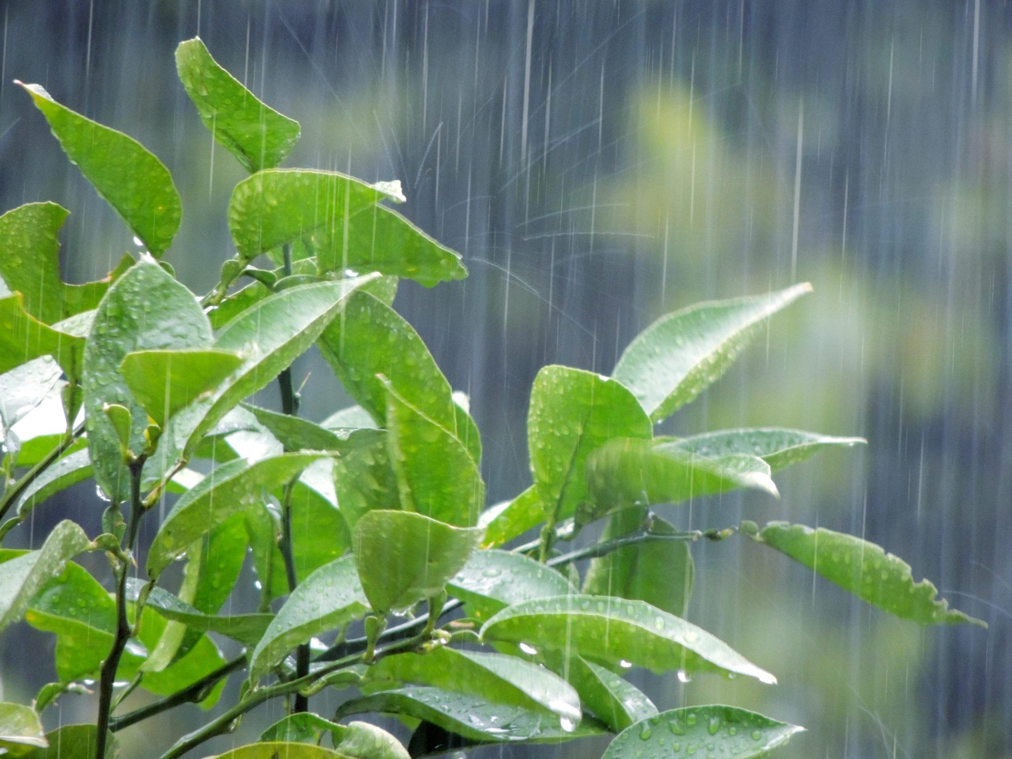 雨が降っている画像